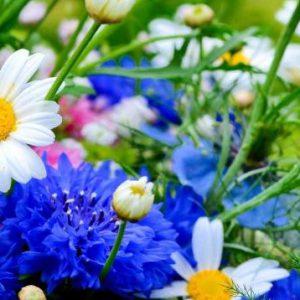 Unverarbeitete Kräuter und Blüten